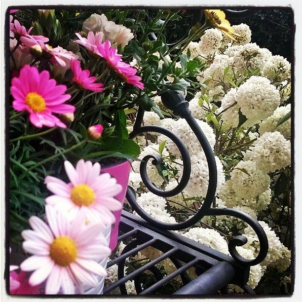 I fiori che non colsi #flowers #fleurs