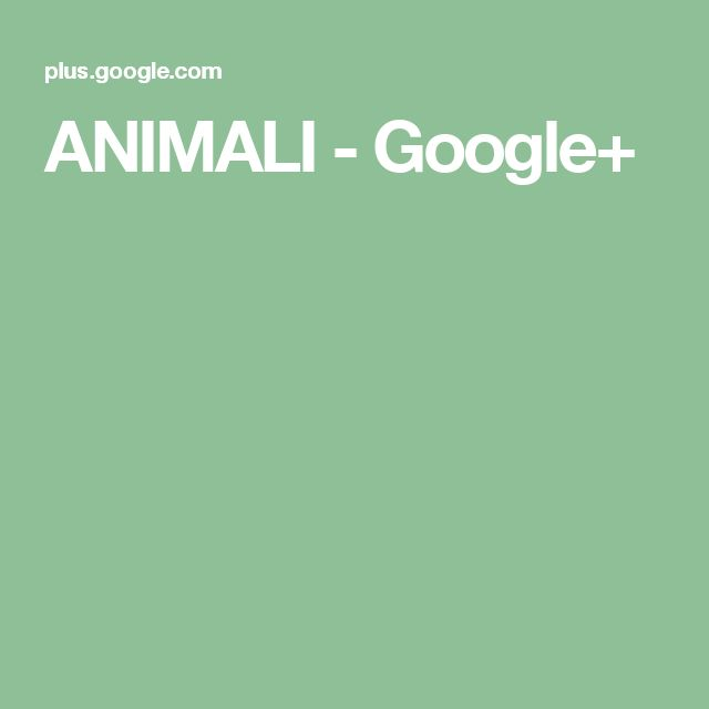 ANIMALI - Google+
