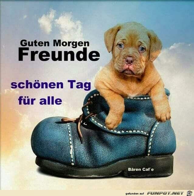 Guten Morgen Freunde Guten Morgen Pinterest собаки