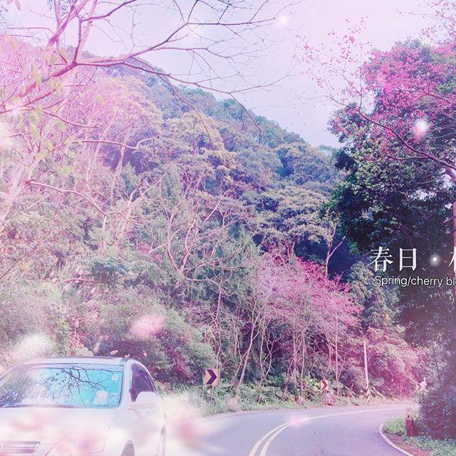 【allen_rose1120】さんのInstagramをピンしています。 《✨💟◡💟✨🌾🍃🌸🌺🌸💕✨ ---*春日。樱景*--- 雖然樱花沒有全開 欣賞一路上ㄉ景色也很美逆 車子行駛過後覺得美 我下車回拍老公車和後面公路風景 覺得美啦~ *旅途中延途風景是醉綺麗風光 · · #2017 #今日 #三峽 #賞櫻 #櫻花 #樱 #楓葉 #落葉 #pink #東眼山 #姐愛旅行 #綺麗 #生活憶朮 #日常写真 #写真 #可愛い #拍 #roseの日常 #rose愛回憶 #taiwan #taipei #L❤️ve #cherryblossoms #car #instagram #like4like #photo #20170218》