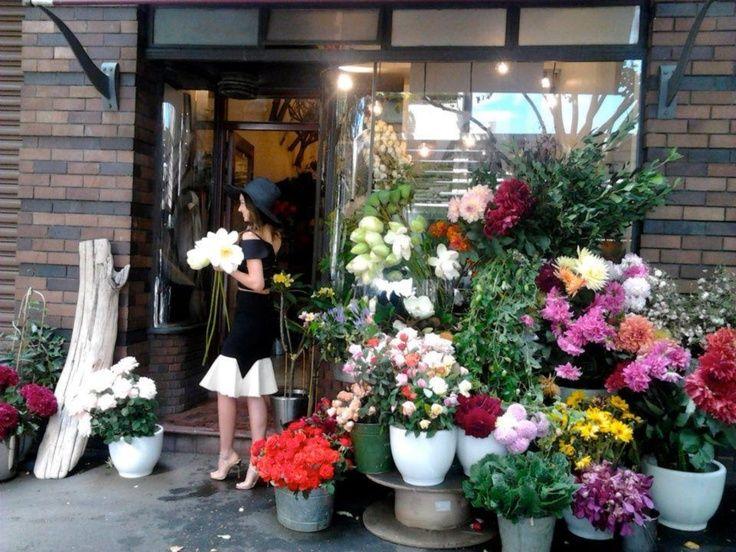 grandiflora sydney - Google Search
