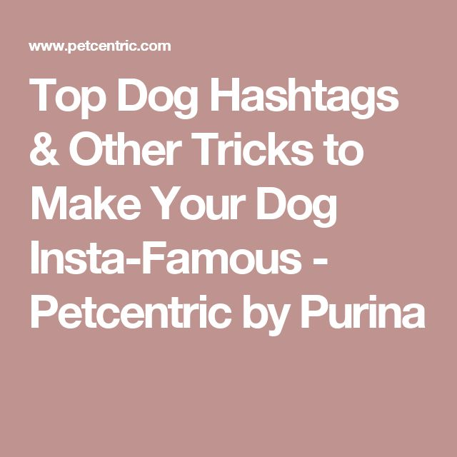 Top Dog Hashtags & Other Tricks to Make Your Dog Insta-Famous - Petcentric by Purina