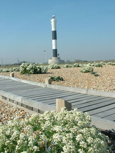 The boardwalk & lighthouse