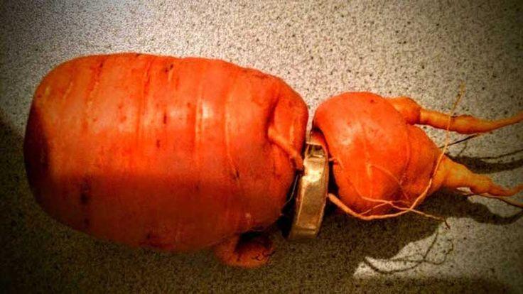 une carotte ramène l'alliance perdue d'un vieux jardinier - https://www.2tout2rien.fr/une-carotte-ramene-lalliance-perdue-dun-vieux-jardinier/