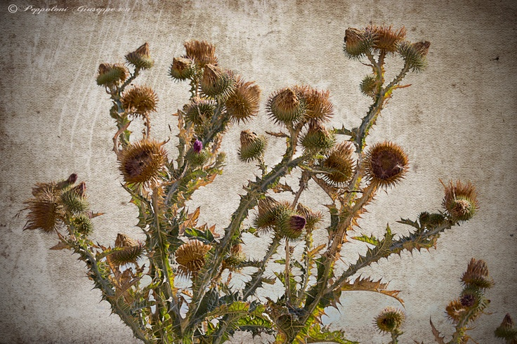 Mountain flora by Giuseppe  Peppoloni, via 500px