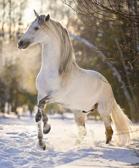 Dapple gray horse in the snow - Equine Photography by Ekaterina Druz   Nature   Pinterest   Dapple grey horses, Equine photography and Horse