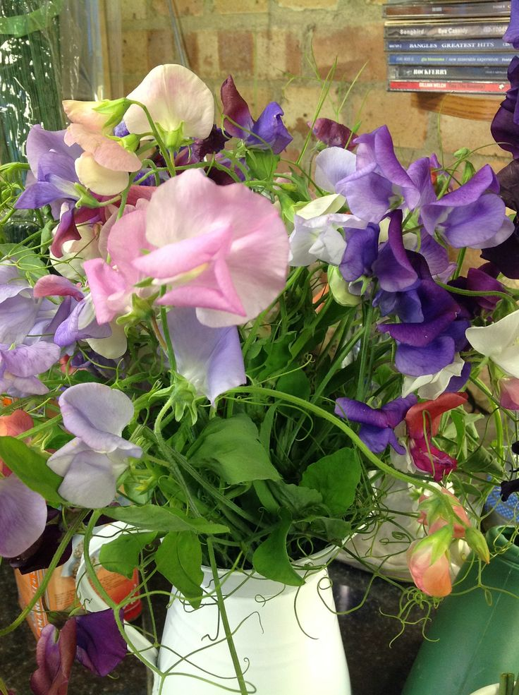 Sweet Peas in glorious colours
