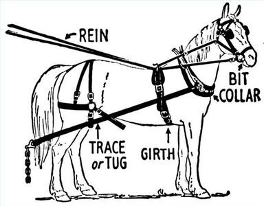 How to Fit a Horse Harness | eHow.com