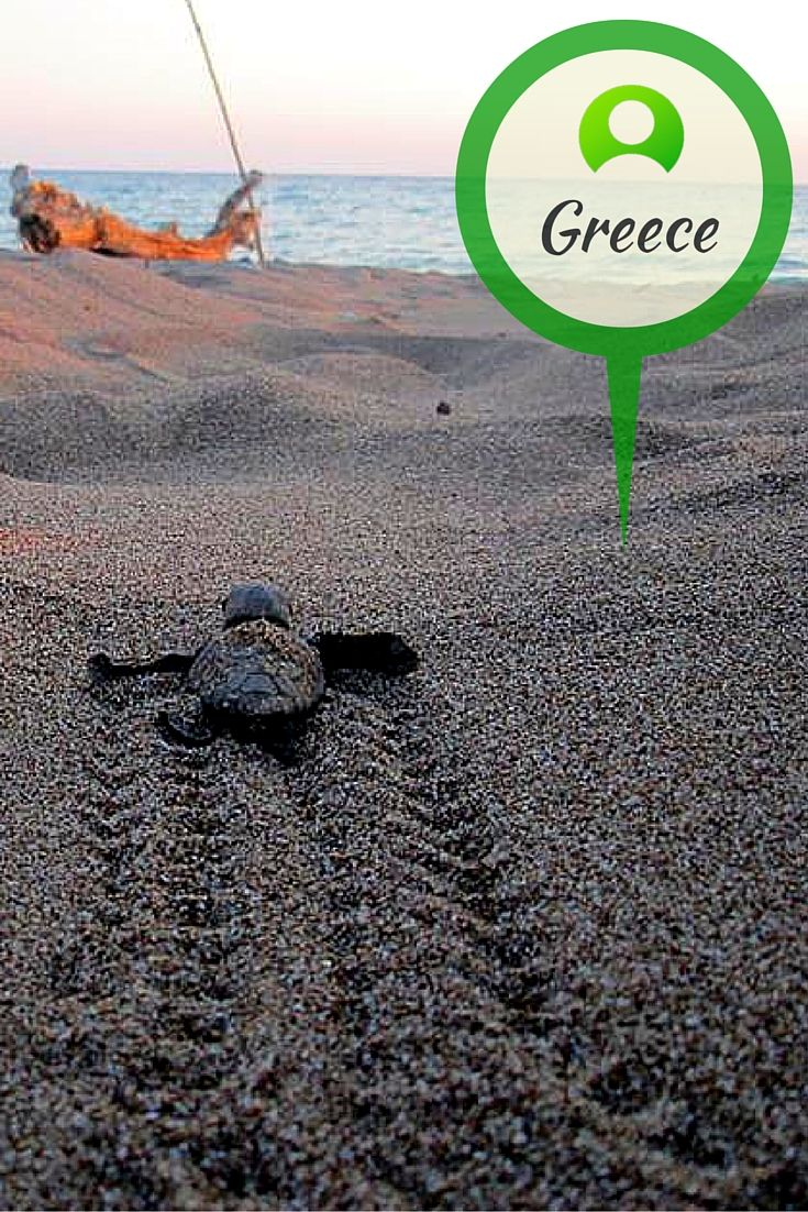 Travel to historic Greece with our volunteers as they make sure nesting turtles and their hatchlings make it safely to the sea.  www.gvi.co.uk