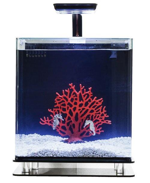 Serene Seahorse System