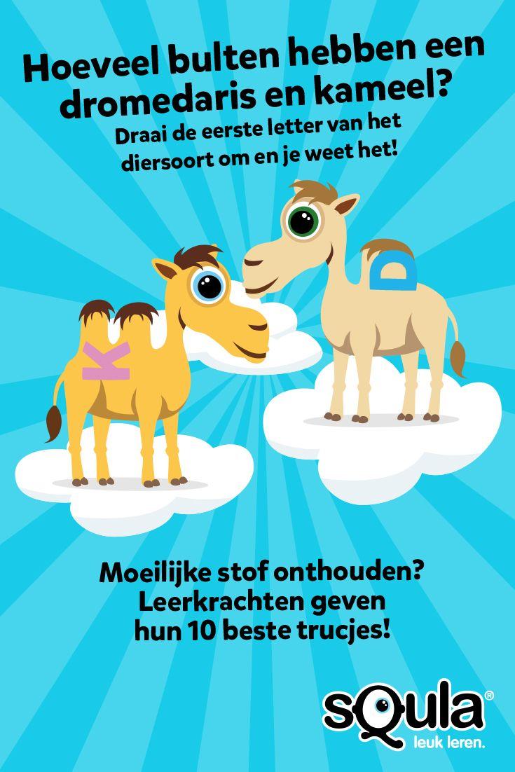 Hoeveel bulten hebben een dromedaris en kameel? Draai de eerste letter van het diersoort om en je weet het! Deze en andere ezelsbruggetjes van leerkrachten op ons blog.