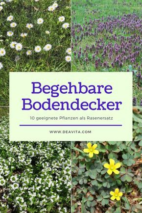 25+ Best Ideas About Stauden Pflanzen On Pinterest | Präriegarten ... Begehbare Bodendecker Rasenersatz Pflanzen