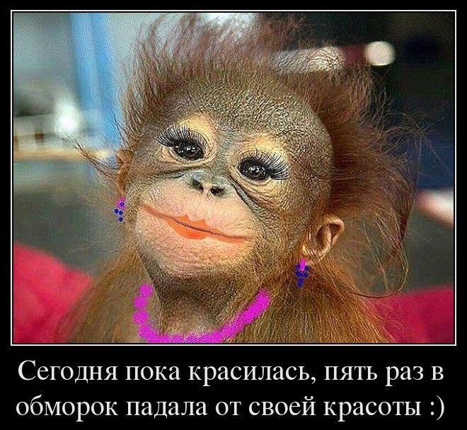 Прикольные фото обезьян | Смешной юмор, Рабочий юмор и ...
