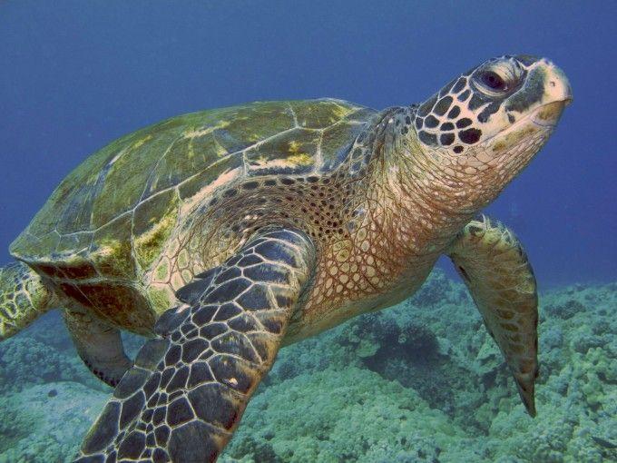 Met wat nagellak, haarextensie lijm, stukje wetsuite en een zonnepaneel schildpadden wereldwijd volgen