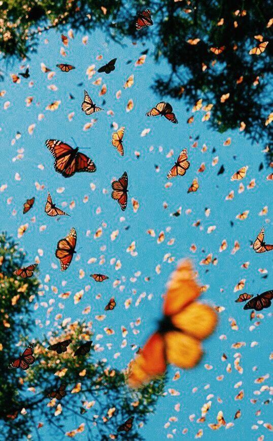 Vsco Danke Fur Die Repubss Bellakimsey Butterfly Wallpaper