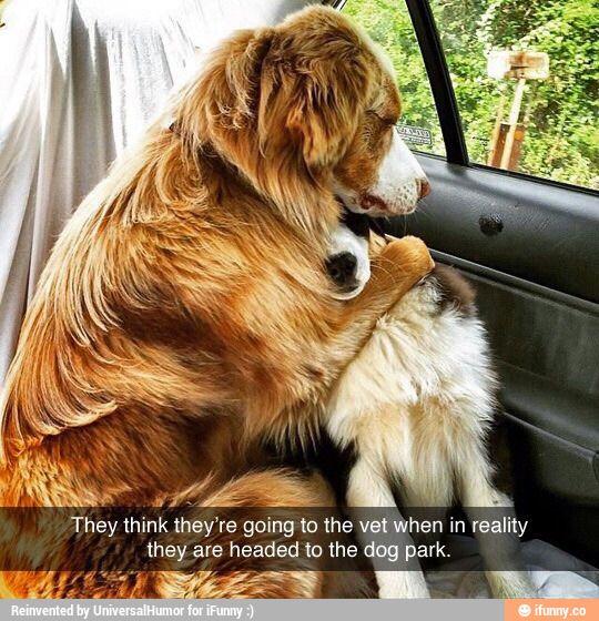 Dramatic dogs