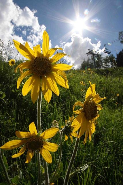 Spring Sunshine - Durango, Colorado