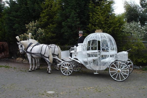 Horse and Carriage Wedding | offer the option of 4 or 6 White Horses with our Cinderella Carriage ...