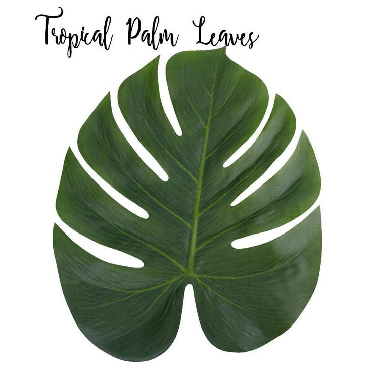 Excited to share the latest addition to my #etsy shop: Large Palm Leaves 6ct Tropical Leave - Palm Leave Table Decor - Luau Party Decor - Hawaii Party Theme Favors - Sea Party Decor - Palm Tree http://etsy.me/2iua1ZR #papergoods #beach #tropical #hawaii #partytheme #ocean #paradi