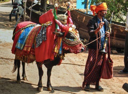 Decorated Cow in Goa, India