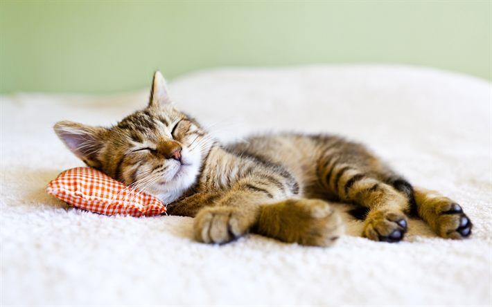 Download wallpapers sleeping cat, 4k, kitten, cats, pets, cute animals