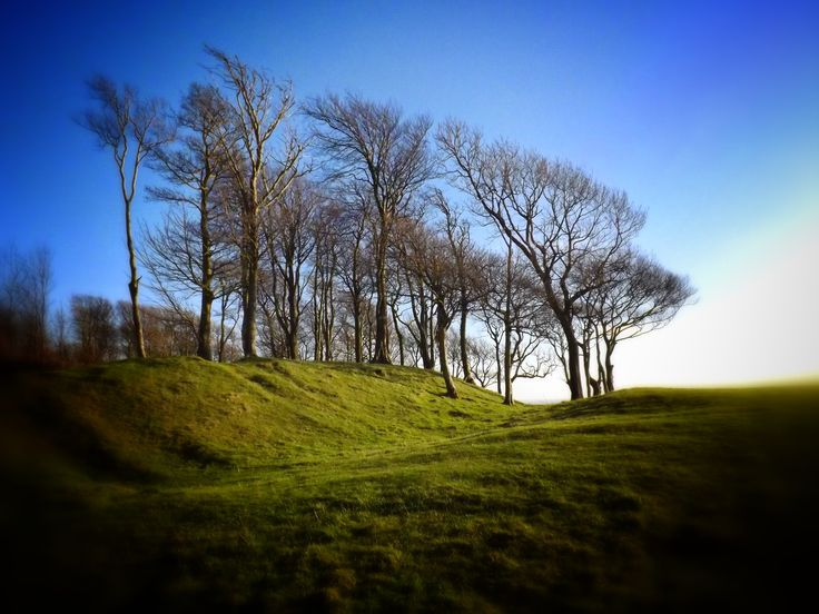 Chanctonbury Ring, South Downs Way, West Sussex. #southdowns #sussex http://www.southdownswalking.com/storrington-chanctonbury-ring-walk/