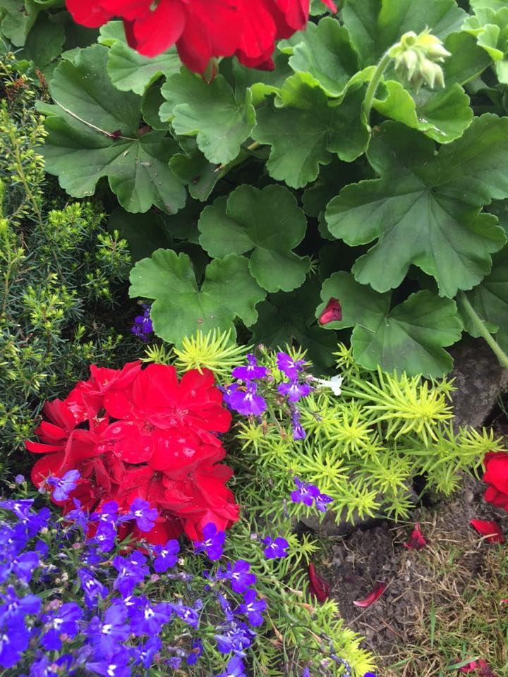 (8) Facebook Цветы, Сад и Дерево