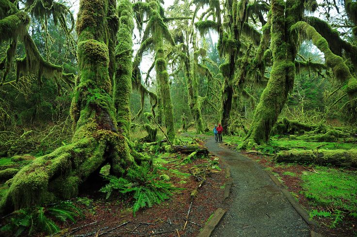 The Hoh Rainforest is home to a National Park Service ranger station, from which backcountry trails extend deeper into the national park.