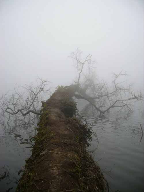 .: Water, Inspiration, Paths, Old Trees, Beautiful, Places, Bridges, Branches, Natural Photography Forests