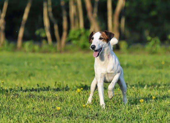Złamania u psa