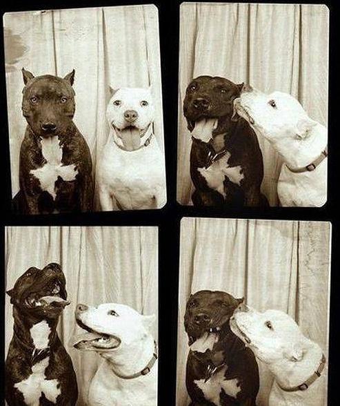 Dogs.friends.love