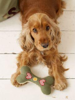 Cocker Spaniel Dog Collar, Dog Leads, Cocker Spaniel Dog Beds & Dog Carriers