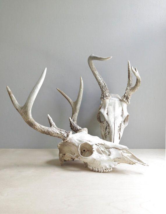 natural history / deer antlers & skull van ohalbatross op Etsy, $54.00