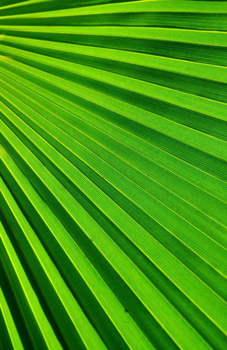 Green Colors For Living Rooms: 266 Best Color Green - Verde!!! Images On Pinterest