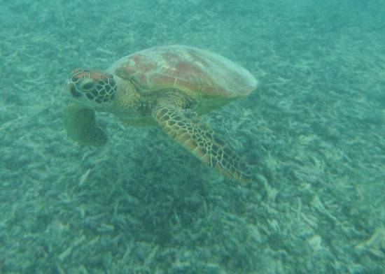 Lifou Island - for turtle watching