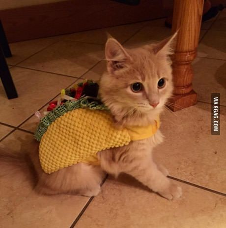 Taco cat is the cutest palindrome