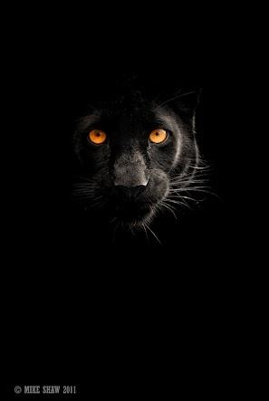 Black ~Mike Shaw