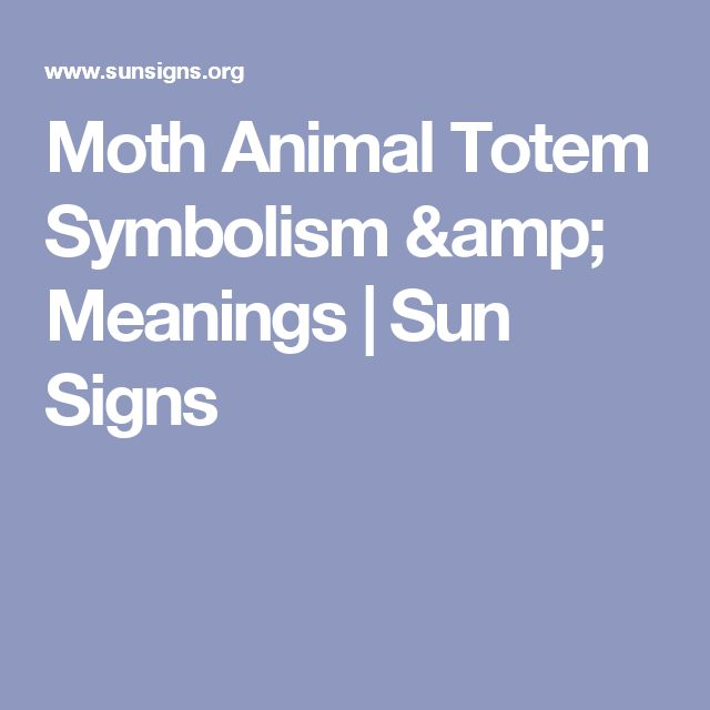 Moth Animal Totem Symbolism & Meanings | Sun Signs