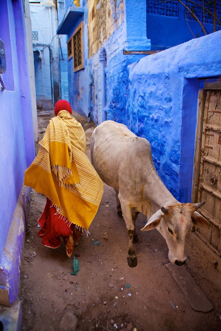 A cow and a monk pass each other on a street in Jodhpur, Rajasthan