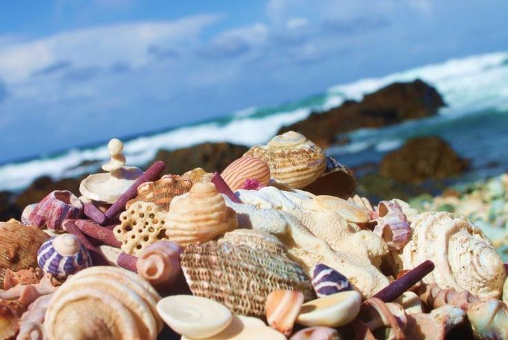 Woolgoolga, NSW, Coastal, shells, beach in Australia!
