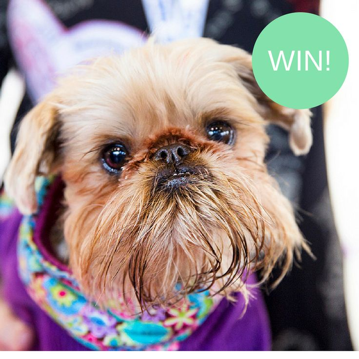 Melbourne Dog Lovers Show - Giveaway! http://tothotornot.com/2017/04/melbourne-dog-lovers-show/