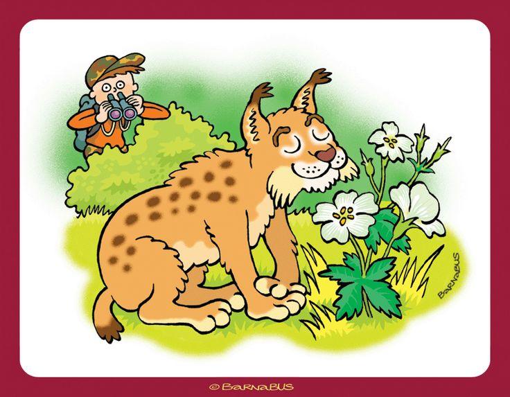 © Barnabus - Książka eRyś zaprasza do lasu 2 ▪ Book eRys Invites You to the #Forest - Obserwowanie rysia ▪ Watching #lynx.