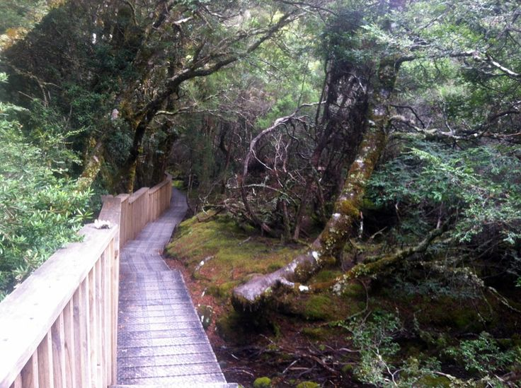 Enchanted Forest - Cradle Mountain