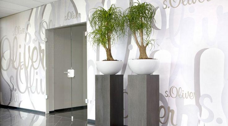 Plant kantoor decoratie idee n google suche gef ssbepflanzungen im innenbereich pinterest - Decoratie kantoor ...