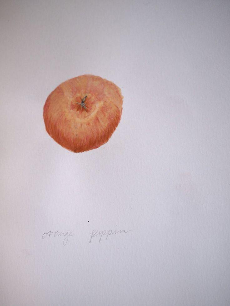 Orange Pippin