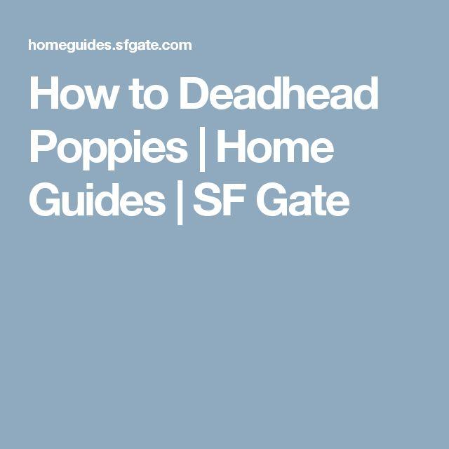 How to Deadhead Poppies | Home Guides | SF Gate
