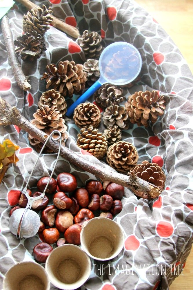 Count, sort and measure with natural materials in an Autumn sensory table!