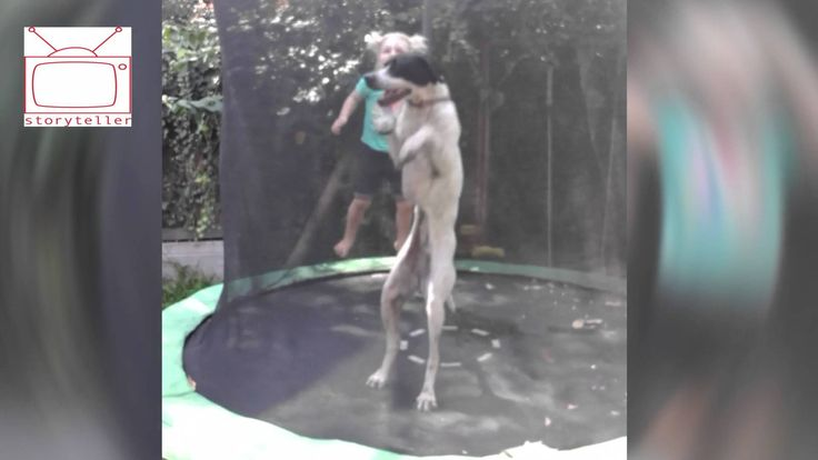 Incredible bouncing dog.