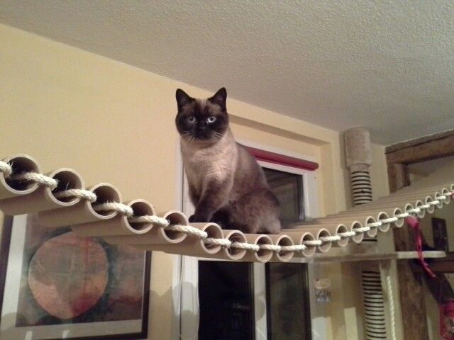 Self-made bridge..for cats only!