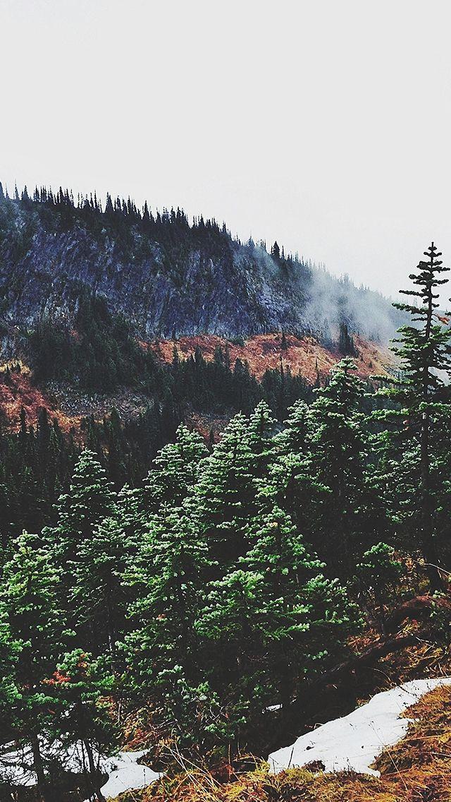 Best 25 forest wallpaper iphone ideas on pinterest - Pine tree wallpaper iphone ...